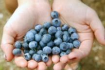best antioxidant foods