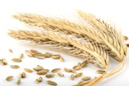 list of whole grains